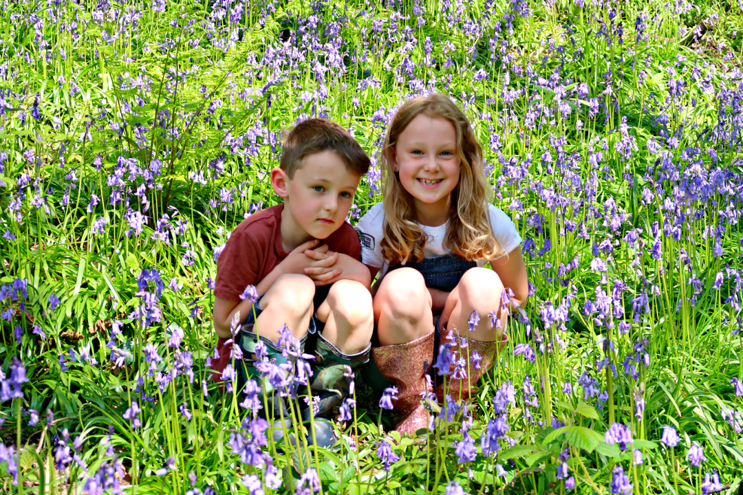 Down Among The Bluebells…