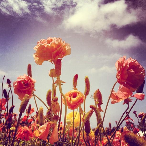 flower sky