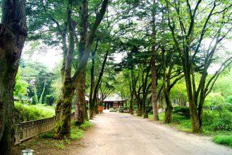 Gingko Tree Lane
