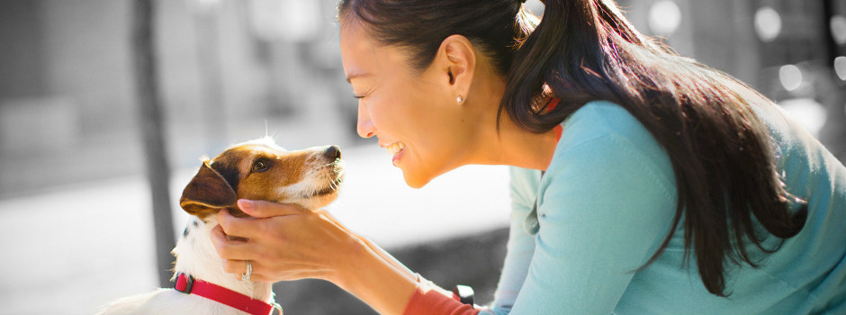 Do Humans Really Understand Dog Growls? Image Source: Purina