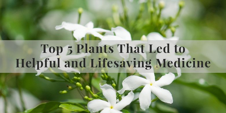 Top 5 Plants That Led to Helpful and Lifesaving Medicine.