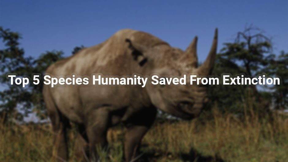 Top 5 Species Humanity Saved From Extinction.