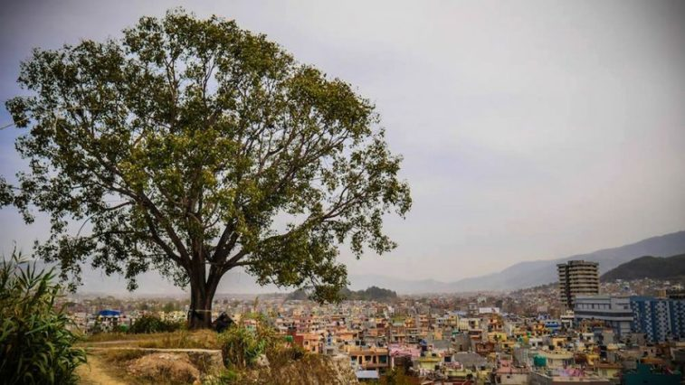 The Protected Tree - Asian Tree of the Year 2019