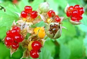 昆虫って花粉まみれになるのが好きなのかも?