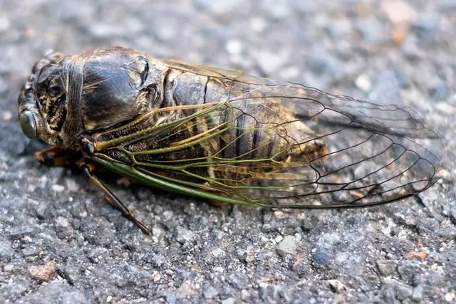 生きるための蝉の死から考える