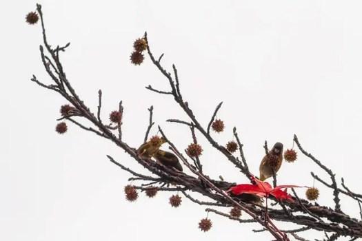 曇り時々晴れときどき小鳥