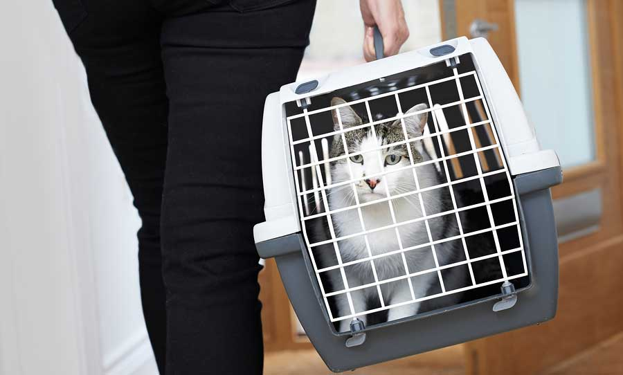 Parrett veterinary service in plymouth, indiana, was founded by dr. Welcome to the Cat Clinic Feline only veterinary hospital