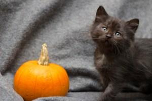 KittensPumpkin_3