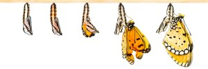 Transformation: Butterflies emerging from cocoons