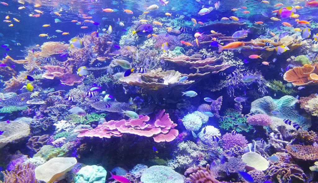 Aquatic diversity: colourful coral and fish