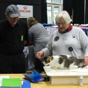 Hamilton Cat Club 67th Annual All Breeds Show 2018