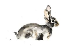 Wee Bunny