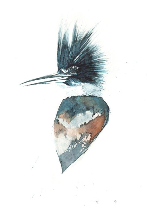 Kingfisher_Portrait_72
