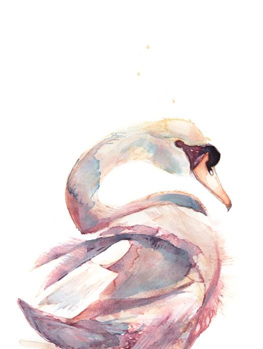Swan Floating Away