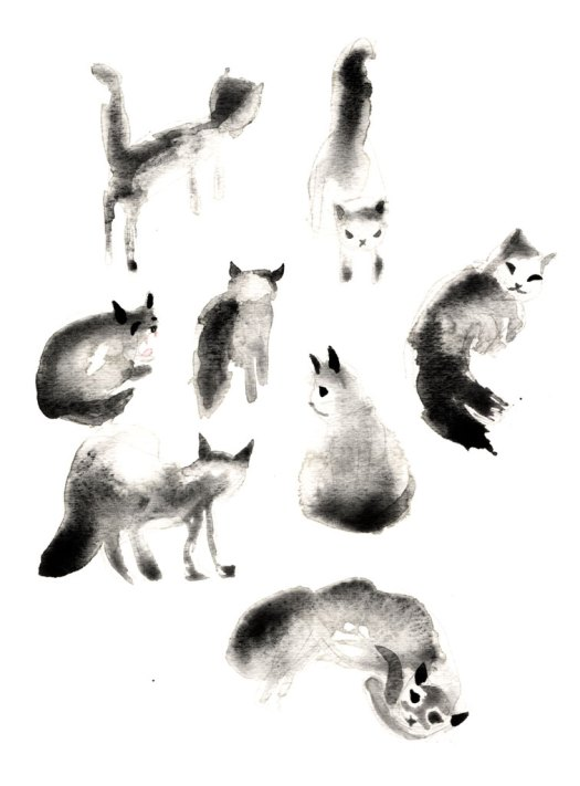 Cats_Study