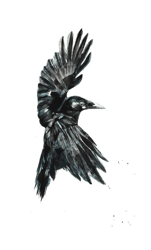 Crow272