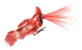 11-29-16_Cardinal