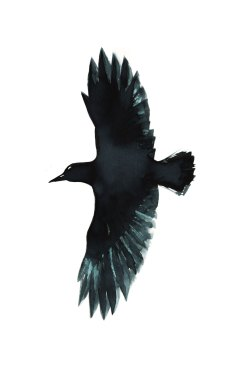 11-29-16_Crow_Look_Forward