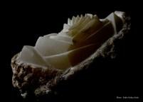 Pierre : Albâtre - Dimensions : 14 x 27 x 17 cm - Année : 2017