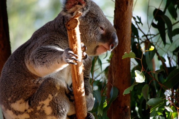 38374_1475160872591_3307620_n australia zoo is the best Australia Zoo is the Best 38374 1475160872591 3307620 n