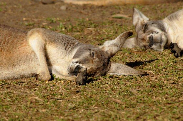 39116_1475162232625_6996598_n australia zoo is the best Australia Zoo is the Best 39116 1475162232625 6996598 n