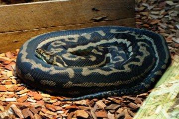 37536_1475155552458_4940671_n australia zoo is the best Australia Zoo is the Best 37536 1475155552458 4940671 n