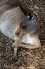 37691_1475159152548_2338235_n australia zoo is the best Australia Zoo is the Best 37691 1475159152548 2338235 n