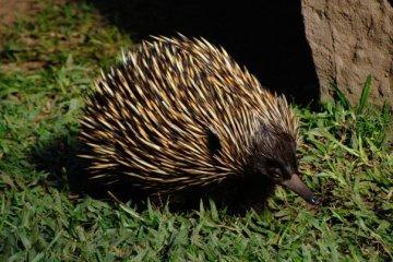 39046_1475157792514_4232984_n australia zoo is the best Australia Zoo is the Best 39046 1475157792514 4232984 n