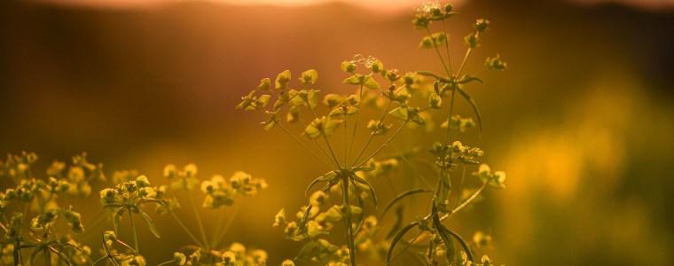 Flowers in low light