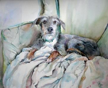 Rosie - treasured companion
