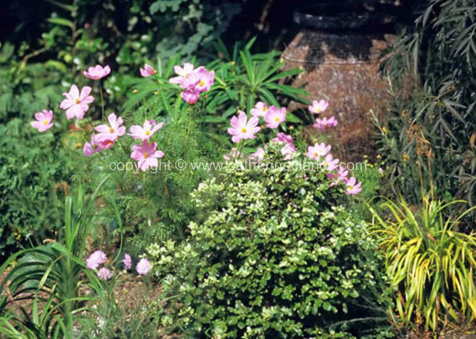 blackheath-walled-garden-5