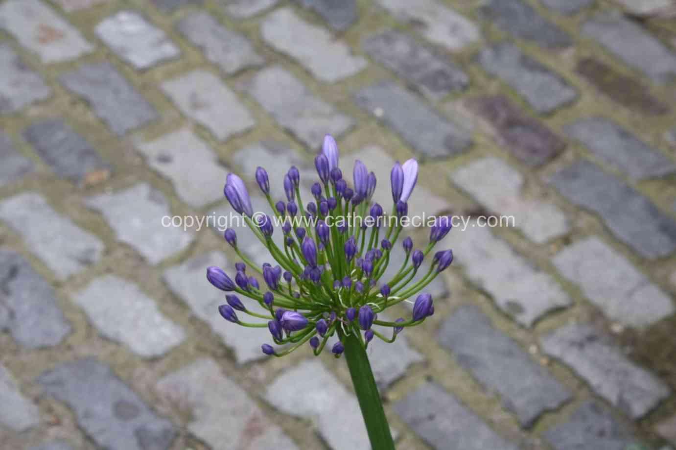 london-courtyard-front-garden-4