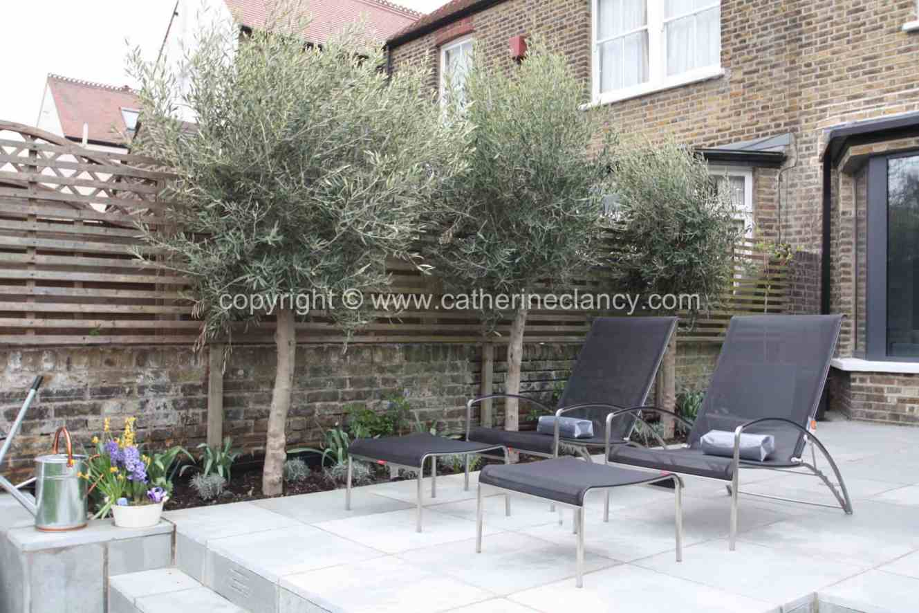olive-and-lavender-garden-2