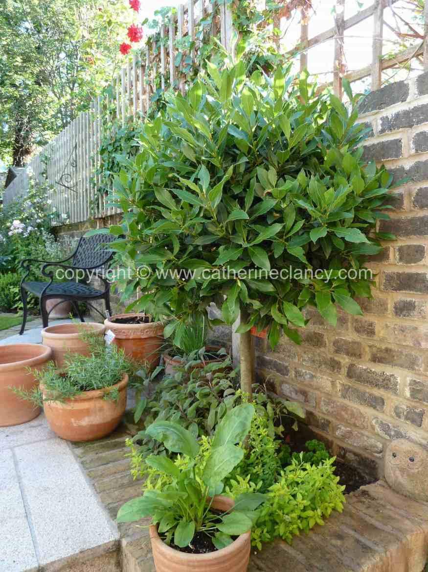 Victorian North Facing Garden Garden Design London Catherine