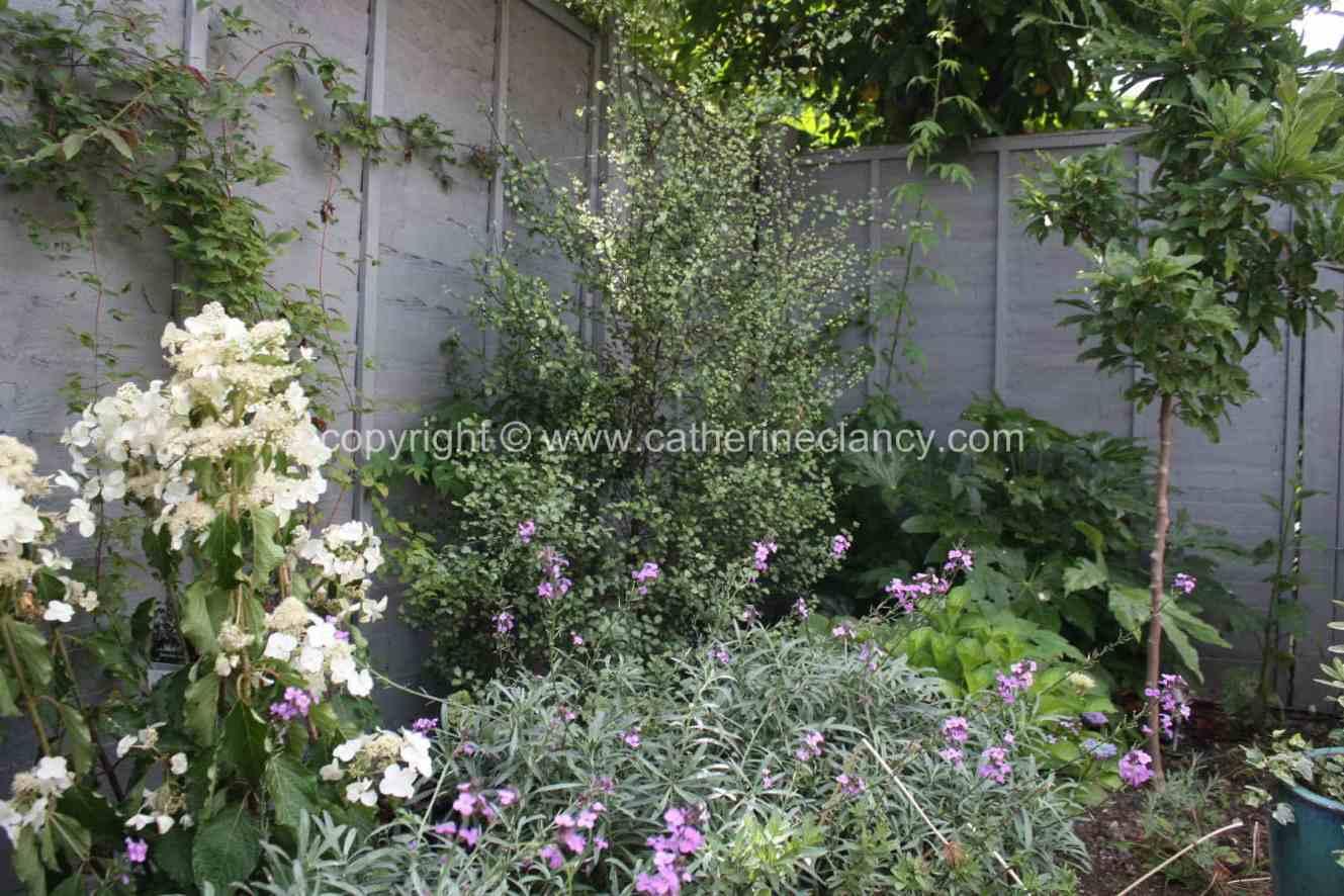 peckham-blue-garden-2