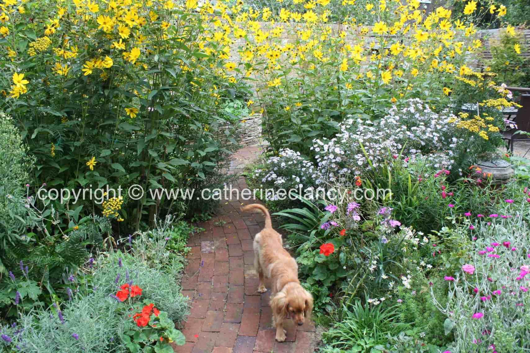 blackheath natural flower garden (46)