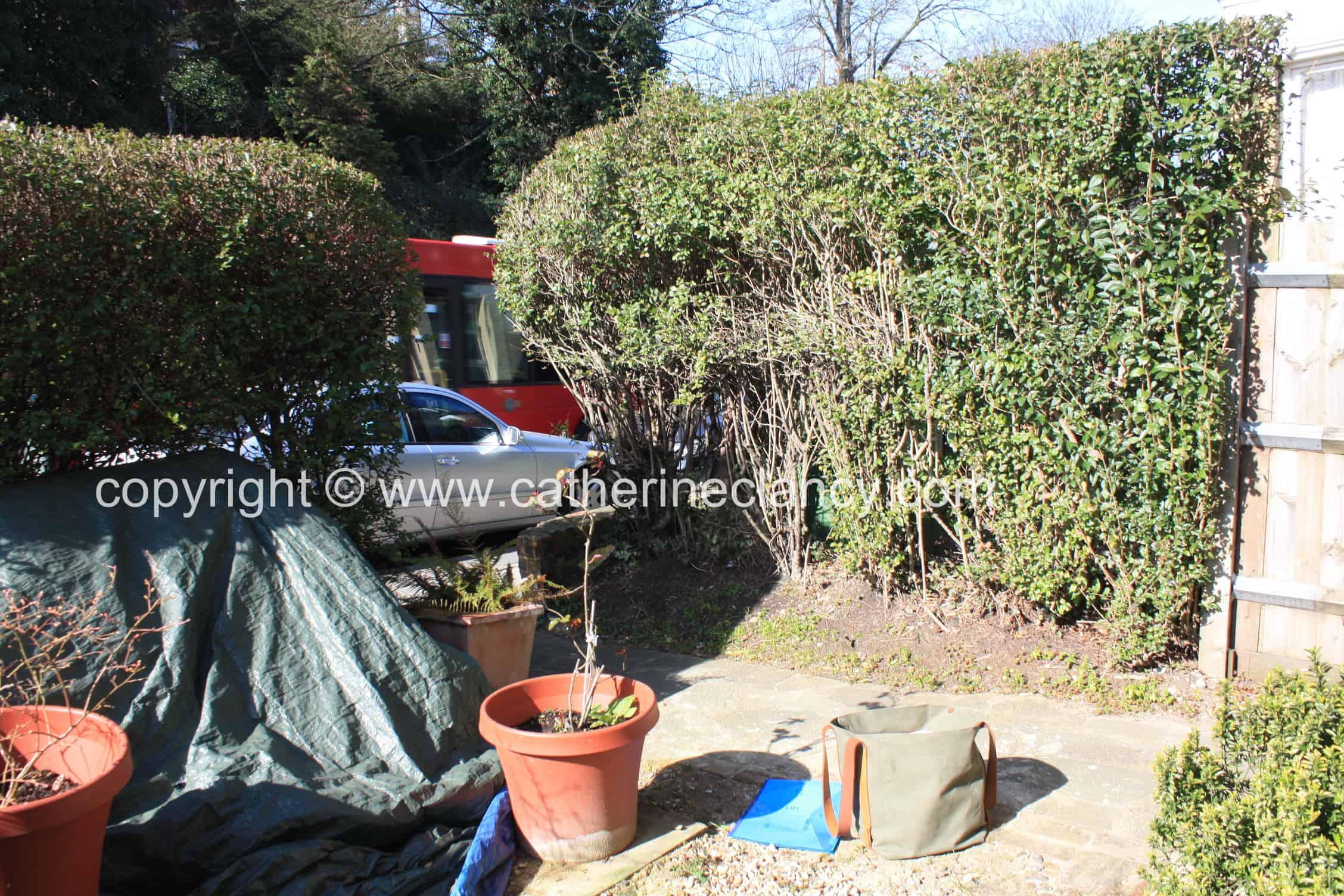 contemporary blackheath front garden 10