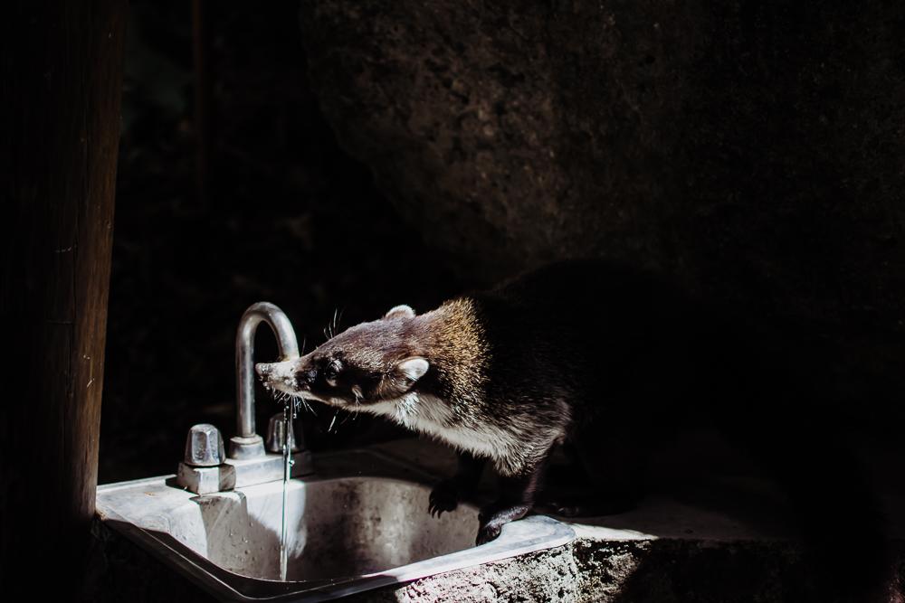 animal drinking water guatemala {virginia beach lifestyle newborn child couples family maternity engagement photographer}