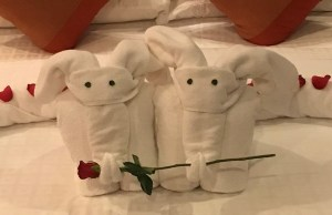 Towels folded into elephants holding a rose