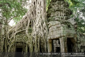ancient stone temple invaded by tree roots