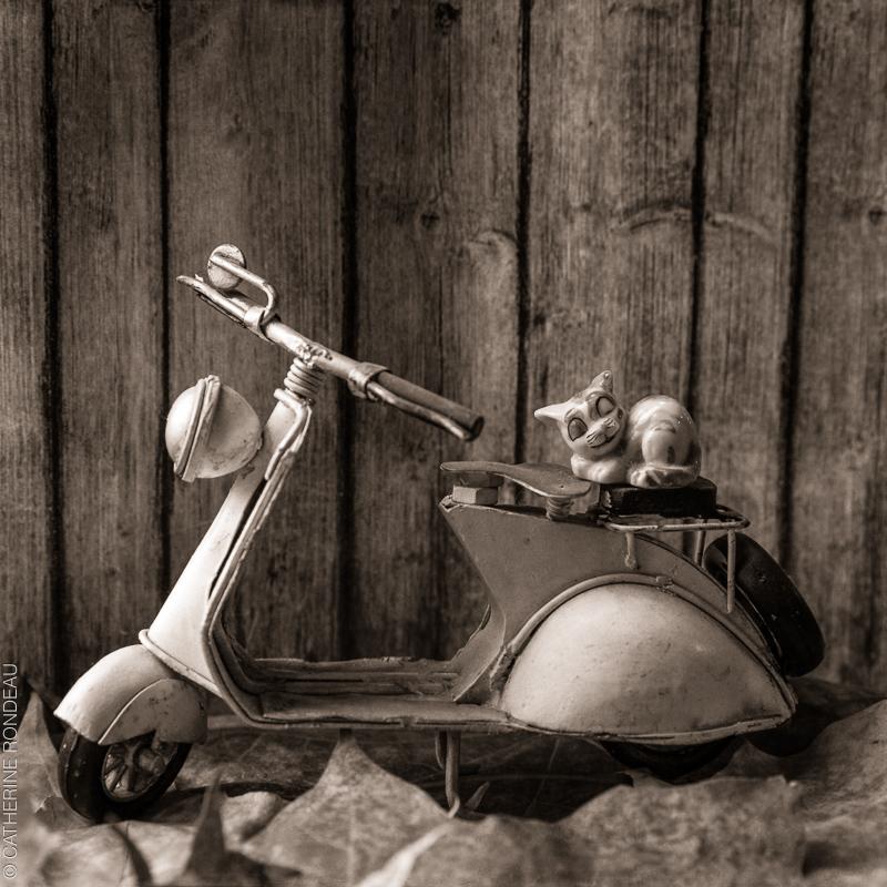 Figurine d'un chat qui dort installé sur le siège d'une moto miniature.
