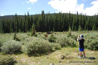 A boy keeps a fairly safe distance from moose grazing near Brainard Lake in Colorado. Moose are dangerous and unpredictable and often charge.