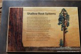 Tuolumne Grove Nature Sign
