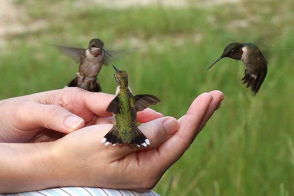 A Flock of Hummingbirds (1/2)