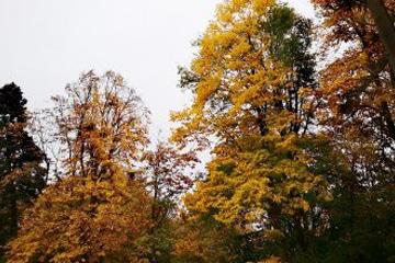 image dans les arbres