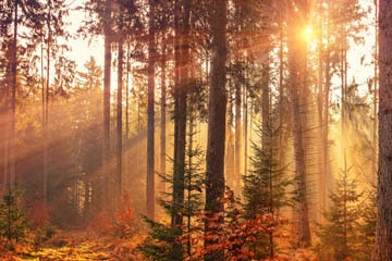 rituels samhain 31 octobre