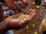The poverty-fighting power of coffee