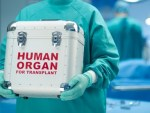Children flee organ harvesters