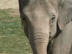 Happy the Elephant Bronx Zoo