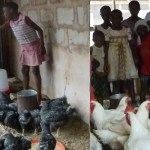 OUR POULTRY